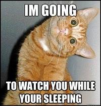 Funny Good night cat meme