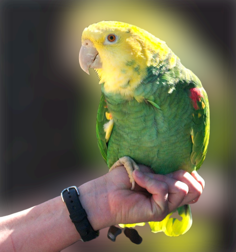 How to tame a parrot