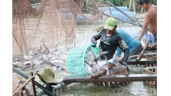 Vietnam's tra fish exports exceed US$2 billion for first time
