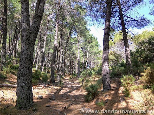 nicio de la ruta la Maroma entre pinares