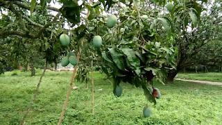 mango-10-verity-get-gi-tag
