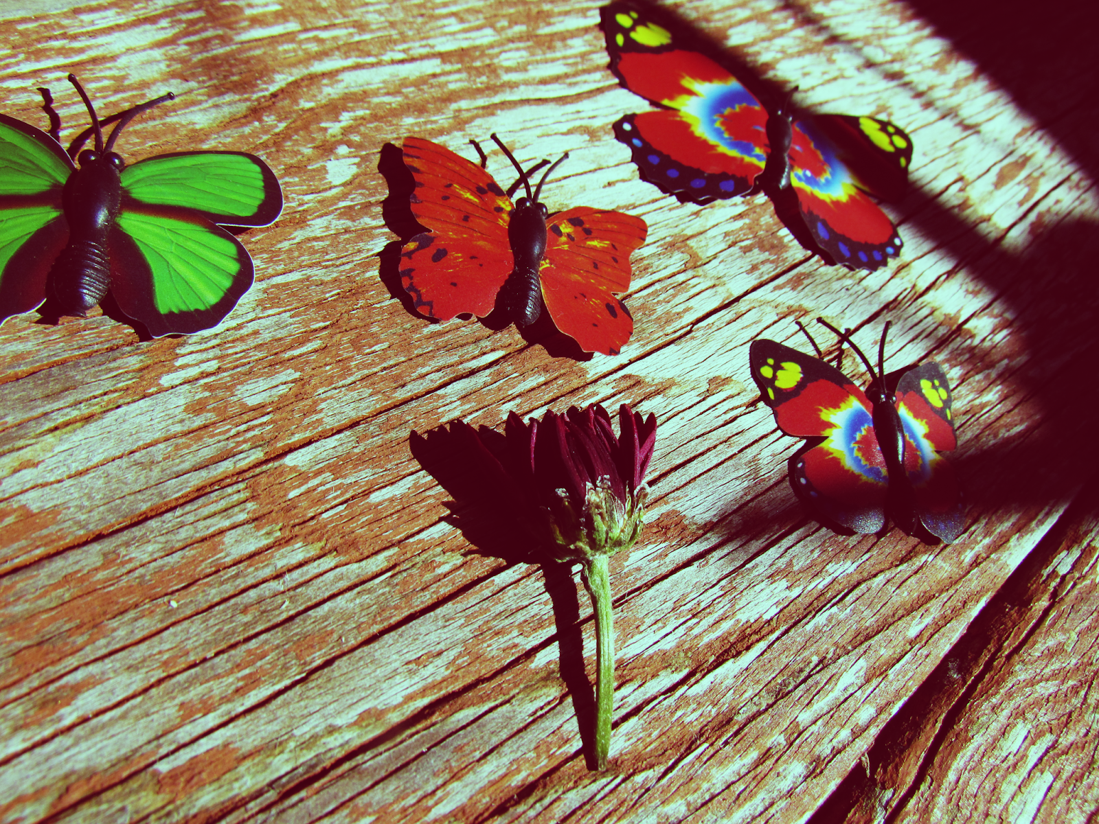 Butterfly and Plant Life Nature Art Flat Lay and Nature Inspiration