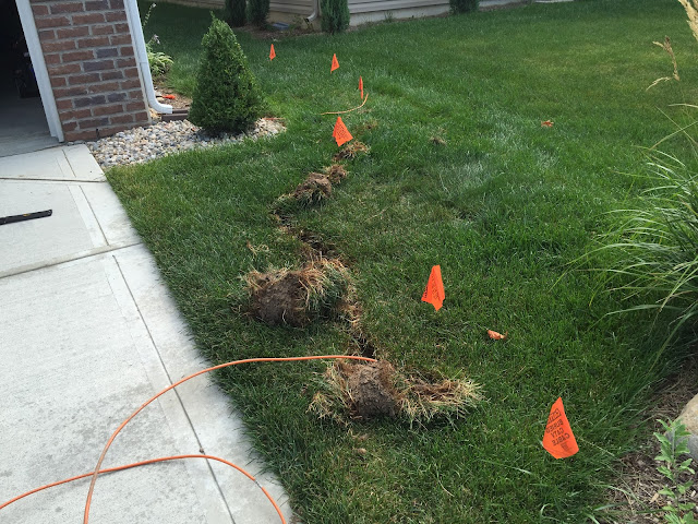 orange cable under sod