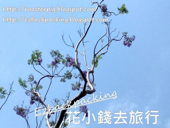 香港藍花楹2021