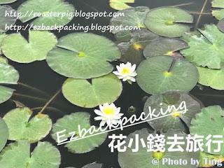 天王川公園蓮花池