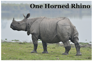 State Animal of Assam- One horned Rhino