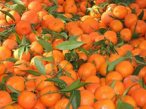 55-60 λεπτά το κιλό η τιμή της Κλημεντίνης στην Αργολίδα