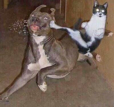 Funny Martial Arts Pets Cat and Dog Picture