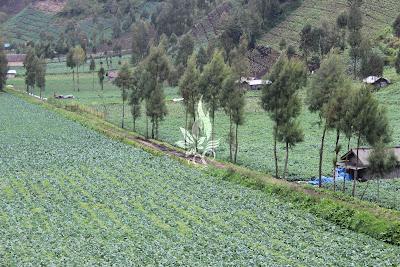 Desa Ranu Pane, T-anto Work