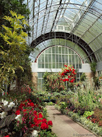 Colorful displays, Auckland Domain Conservatory, Auckland, New Zealand