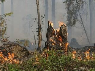 Turkey is Burning | Turkey wildfires | Turkey | Burning | Wildfires