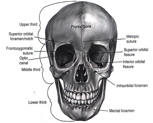 Maxillary Bone Management of facial t...