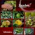 Promueve Horta DIF comida saludable al alcance de la mano
