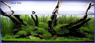 Natural aquascape