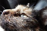 La couleur de son poil a-t-elle une influence sur le caractère de votre chat ?