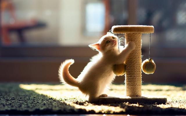Jong katje op klimpaal
