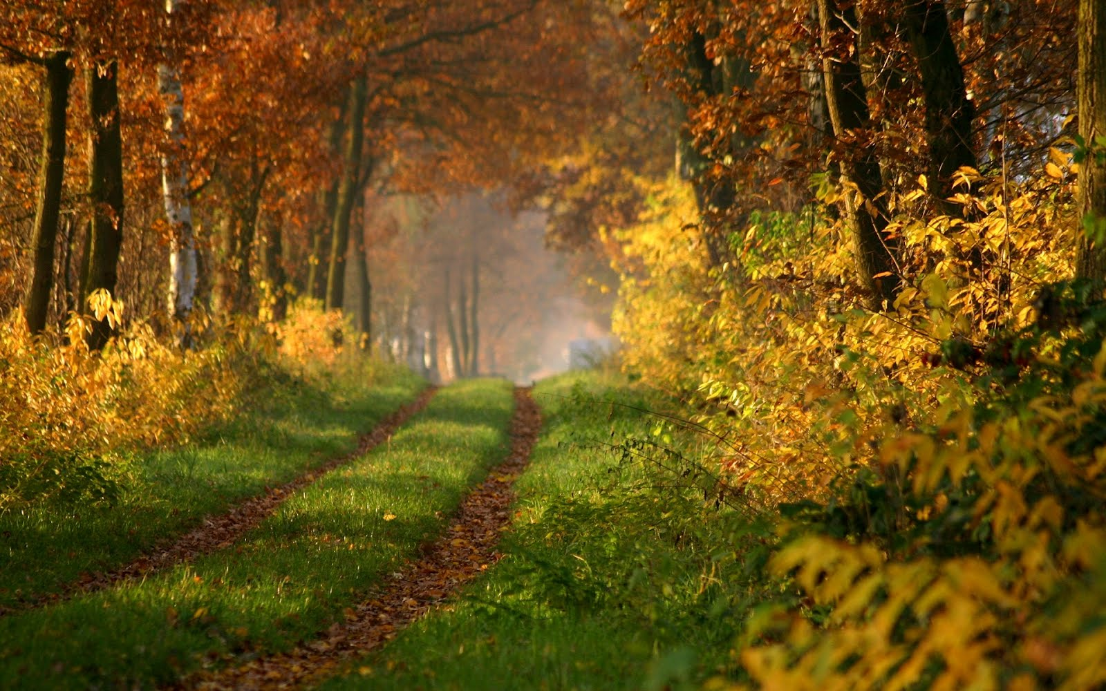 Beautiful Panoramic Autumn Wallpaper