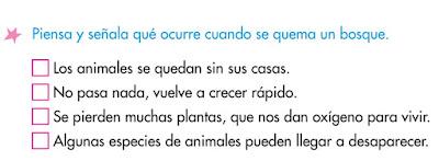 http://www.primerodecarlos.com/SEGUNDO_PRIMARIA/marzo/Unidad1_3/actividades/actividades_una_una/cono/bosque2.swf