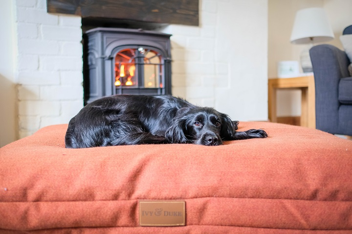 4 Things to Look Forward to With Your Dog this Autumn