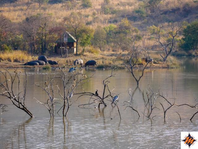 Pilanesberg National Park, Mankwe Dan