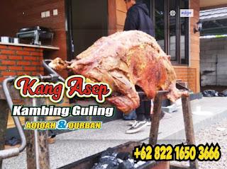 Bakar Kambing Guling Muda di Bandung,kambing guling muda di bandung,kambing guling di bandung,kambing bakar di bandung,kambing guling muda bandung,kambing guling bandung,