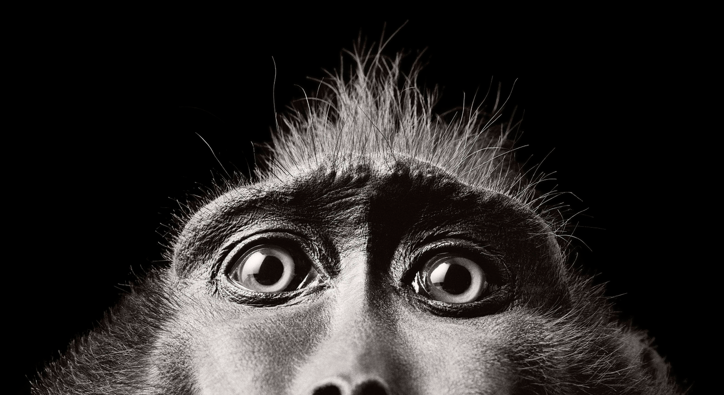 Tim Flach Photography Eyes