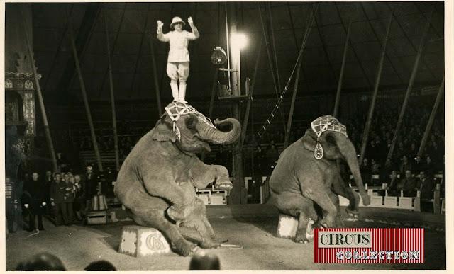 spectacle Les éléphants du cirque Knie, présenté par Charles Knie