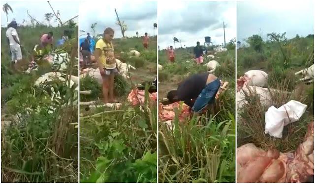 Em Santa Inês-MA, raio mata 21 bois durante temporal e proprietário libera carne aos moradores