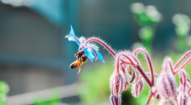 How to Create a Pollinator Sanctuary