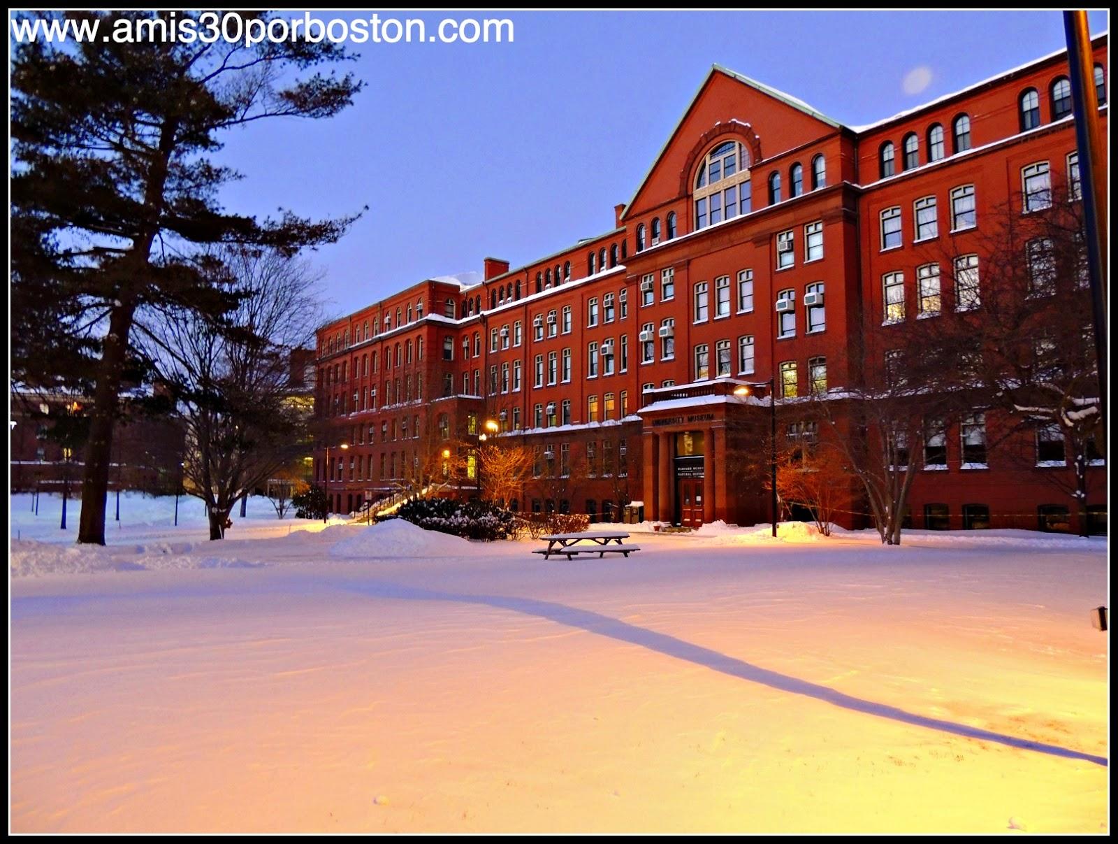 Tormentas de Nieve en Cambridge