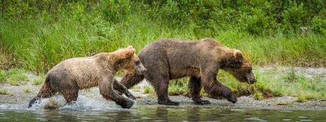 Rusts bear viewing