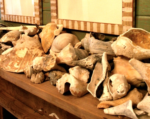 seashell collection on mantel