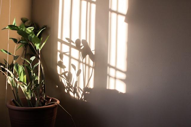luces y sombras zamioculca
