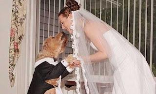 manusia yang menikah dengan binatang