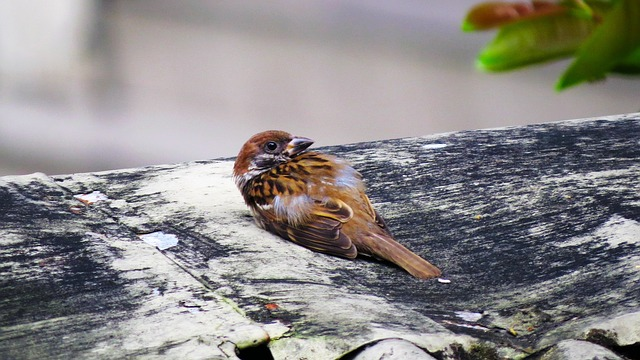 What to do When You See an Injured Bird