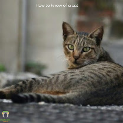 How to know the age of a cat