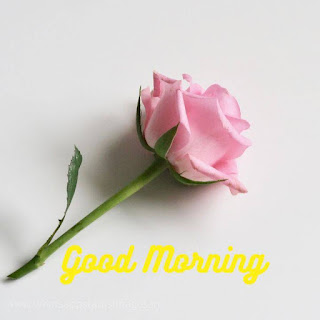 Good Morning Image With Rose Flowers