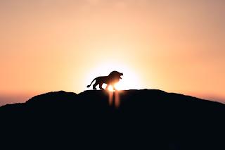 Roaring Lion - Photo by Ivan Diaz on Unsplash