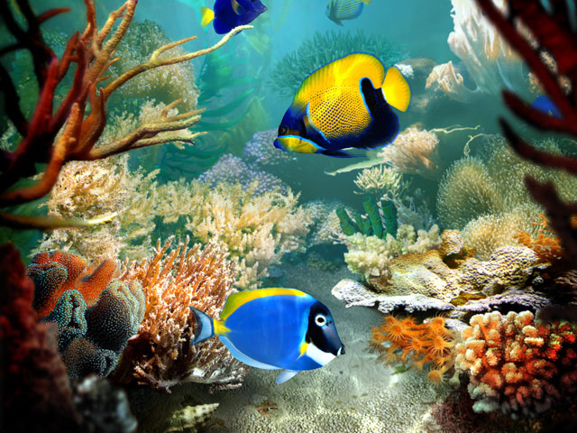 Screenshot Tropical Fish 3D Screensaver 1.3 Build 14 Full Version
