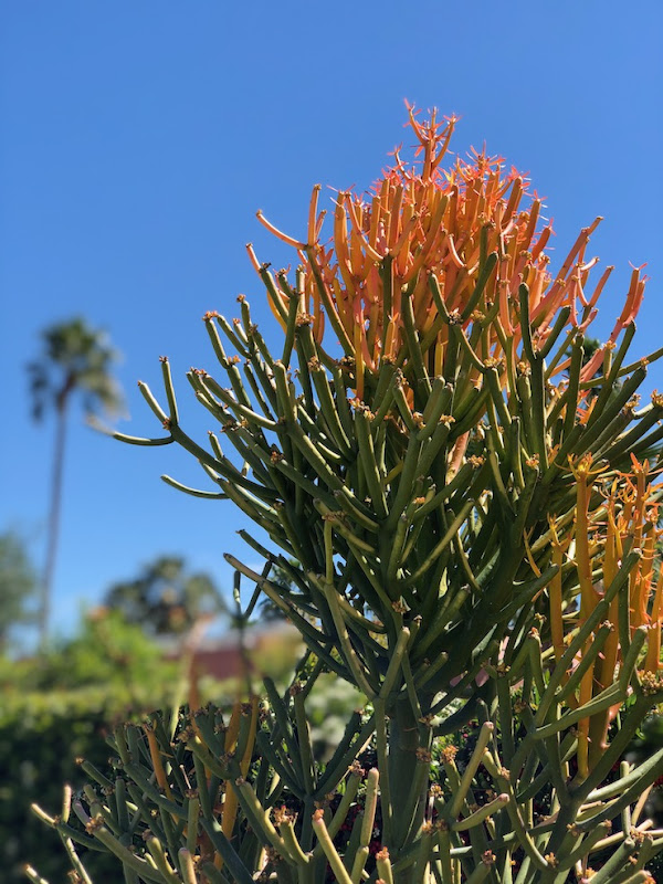 Succulent Sticks on fire