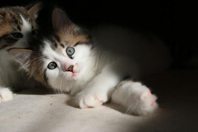 Kucing Mencret Apakah Bisa Berbahaya Untuk Hewan