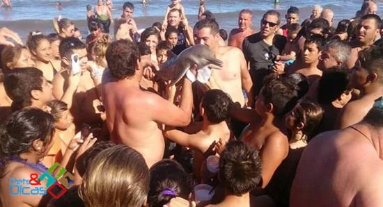 Filhote de golfinho morre na praia na Argentina