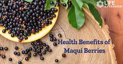 Maqui Berry Aristotelia chilensis shows promise in helping to relieve dry eyes