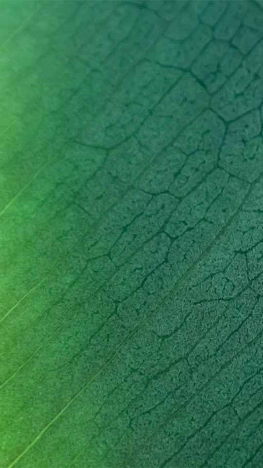 Green Leaf Texture  Galaxy Note HD Wallpaper