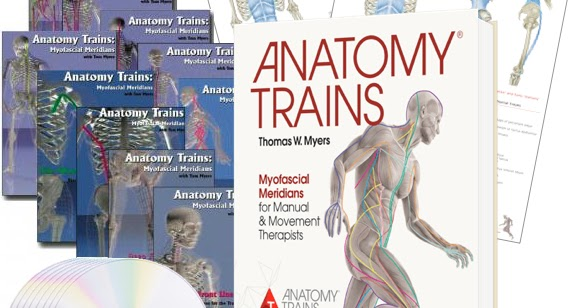 Art Of Motion Circle Of Friends Anatomy Trains Introducing The
