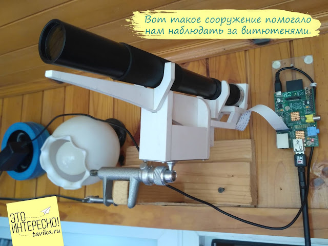 устройство для наблюдения птиц через вебкамеру