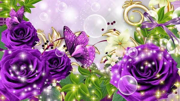 mawar ungu wallpaper