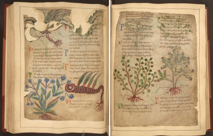 Are You Interested In A 1,000-Year-Old Illustrated Herbal Remedy Guide You Can Now Find It Online For Free