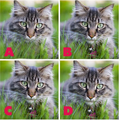 Which image is different? image 10