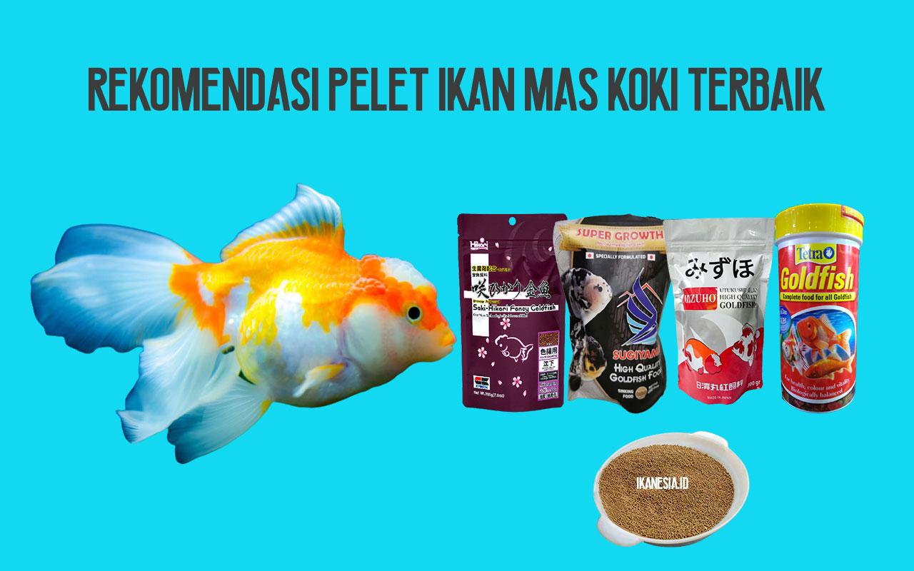 Rekomendasi Makanan Ikan Mas Koki Terbaik